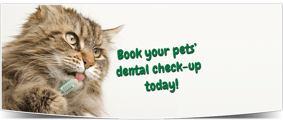 Book your pets' dental check-up today!
